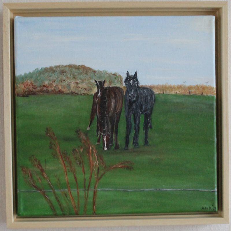 Paarden in de wei, Nederland, te koop