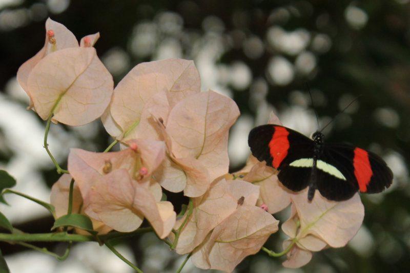 Vlindertuin, 2019